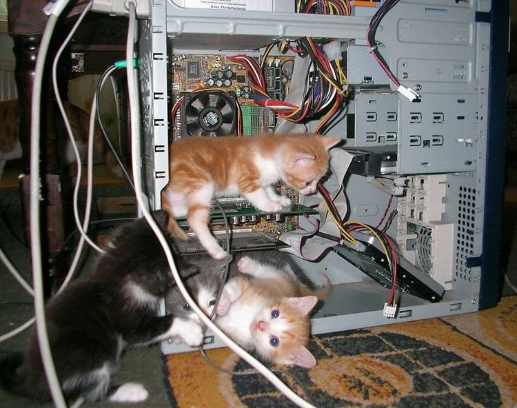 Kittens inside a PC